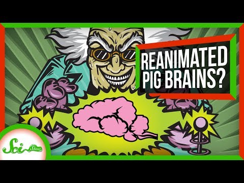 What That Pig Brain Study Really Tells Us