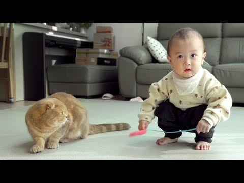 걷기 시작한 아기집사(육냥이)와 고양이들 친해질까?