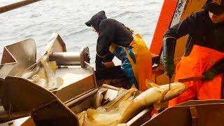 Удивительная Зимняя Рыбалка На Атлантическую Треску у Лофотенских Островов