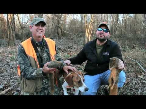 Squirrel Hunting - Smackdown With Some Fine Hunting Dogs! - Sportsman TV