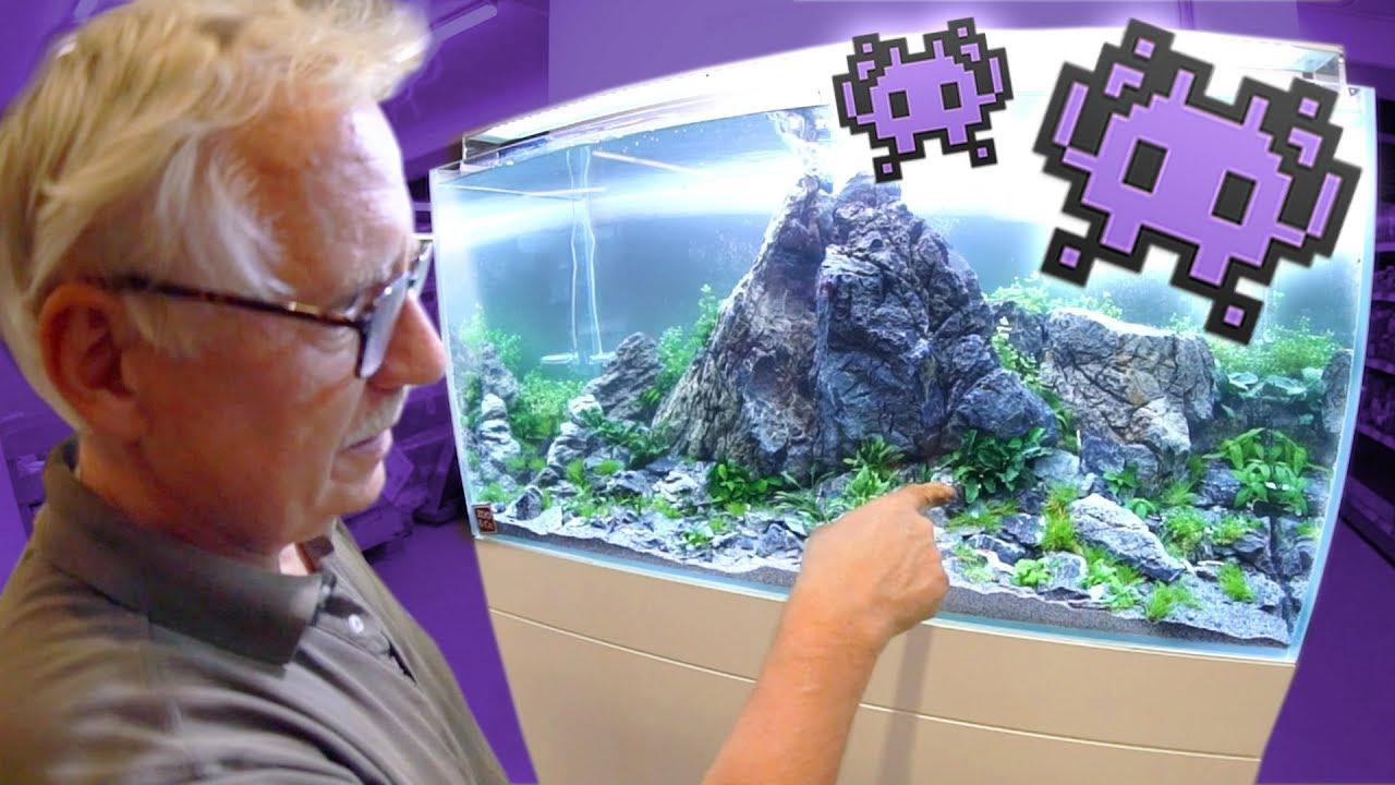 pflanzen kaufen f r 39 s ufo aquarium youtube. Black Bedroom Furniture Sets. Home Design Ideas