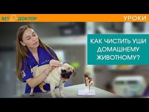 Вопрос: Как чистить уши собаке?