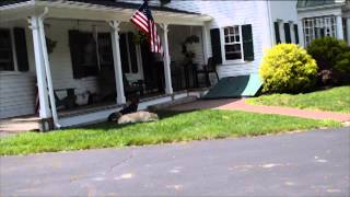 In Home Dog Training in Massachusetts - Arrivals And Visitors