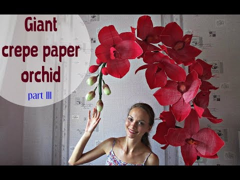 Giant paper orchid. Part 3. English subtitles