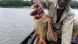 বরশি দিয়ে সুন্দরবন নদীতে মাছ ধরা।। Fishing by hook in rever of Sundarban.