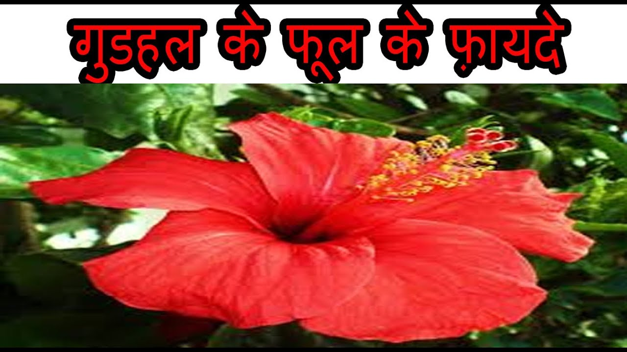 Benefits Of Hibiscus