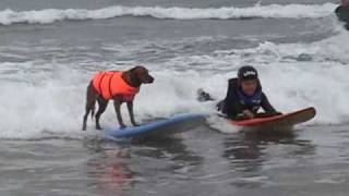Surf dog & adaptive quadriplegic surfer do tandem & party waves