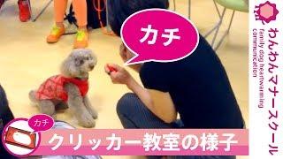 クリッカー教室の様子の動画! クリッカー教室はこちら http://suzuki-m...