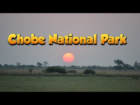 BOTSWANA // CHOBE NATIONAL PARK // SAFARI (2017)