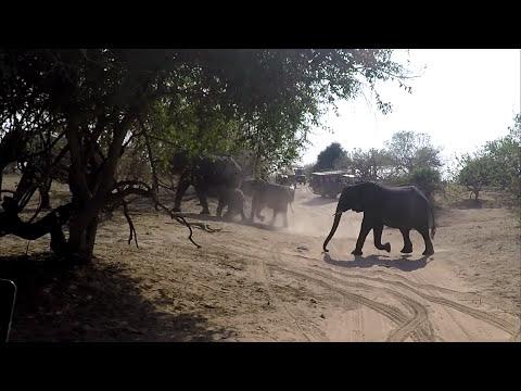BOTSWANA // CHOBE NATIONAL PARK // SAFARI (2017)
