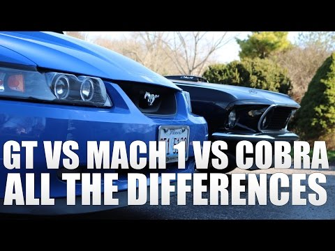 2003 GT, Mach 1 & Cobra - All The Differences!