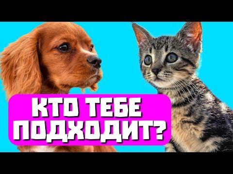 Какое домашнее животное тебе подходит? Тест с прикольным котом Джемом! 🐈