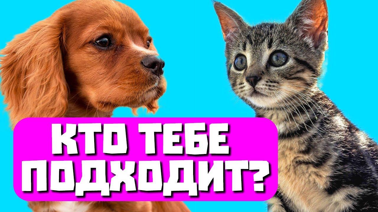 Тест узнай о своем коте