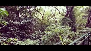 Menunggu Kamu (Jelita Sejuba)  Cover Version