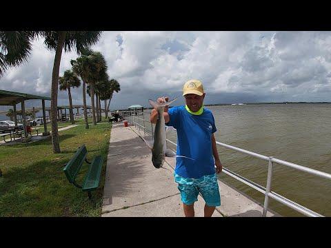 Catfish, Puffer And Gator - Fishing In Titusville