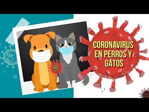 Coronavirus en perros y gatos no afecta a humanos- UNAM Global