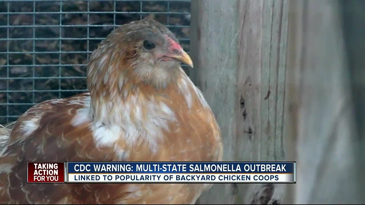 A Salmonella Outbreak Linked To Backyard Chickens Is Making People Sick, Including Children