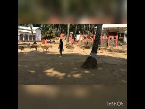 Ross Island, open Deer park, Andaman