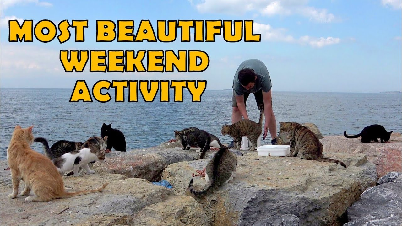 What is the most beautiful weekend activity? Of course cats.