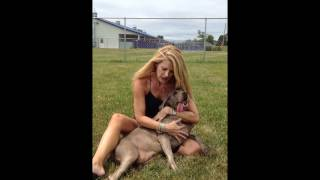 Female Weimaraner In East Tennessee Needs A Loving Home