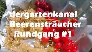 Beerensträucher Rundgang #1 | Himbeeren anbauen | Weiße Johannisbeeren ernten
