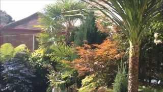 Tropical Gardening In The UK (Summer Update 21/07/2015) (HD)