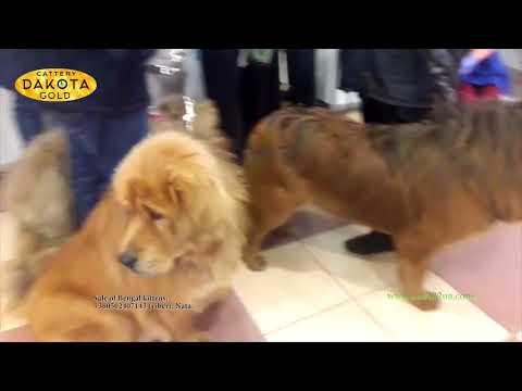 Выставка собак в Киеве, 28 04 2018 часть 1