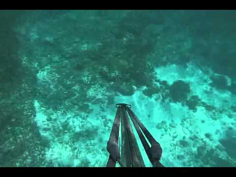 tavernier florida spearfishing and freediving