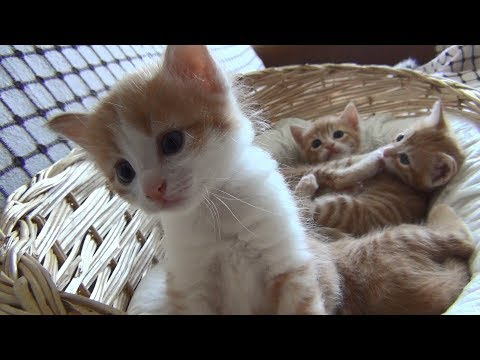 Mom cat with 4 meowing kittens (no added music - pure cuteness)