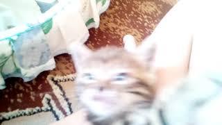 Коту 1 месяц и очень он красив