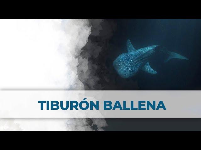 2 Little Divers | Nocturna con Tiburón Ballena