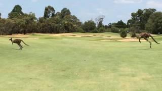 オーストラリアのゴルフ場での出来事です.