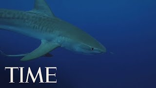 Man Dead After A Shark Attack In Cape Cod, Police Say | TIME
