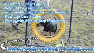 Canine Training Unlimited Website - Canine Training