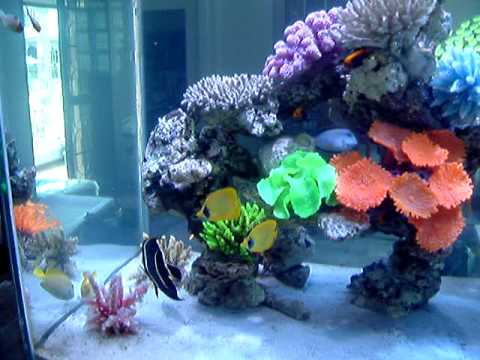 Fish only saltwater tank   YouTube