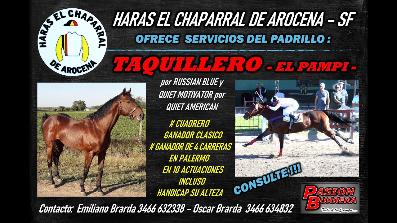 TAQUILLERO (El Pampi) PRESTA SERVICIOS EN HARAS EL CHAPARRAL