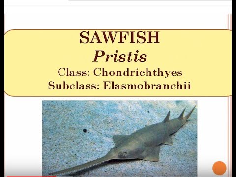 Examples Of Fishes(Pisces) With Scientific Names, Class, Order.