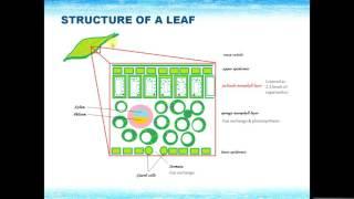 IGCSE BIOLOGY REVISION - [Syllabus 6] Plant nutrition