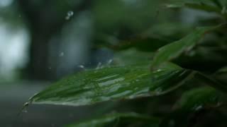 WhatsApp status background video|raining clips|slow motion