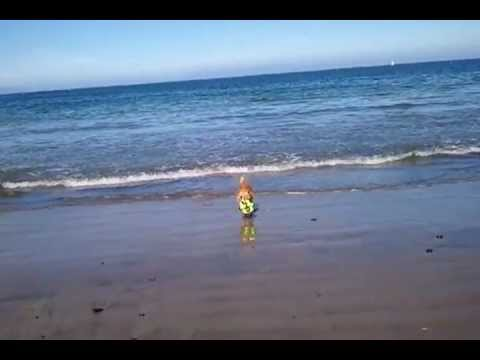 Lucy Oakland California Playing Fetch At Dog Beach With Loopies