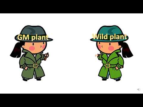 GM and agriculture - Biology Only