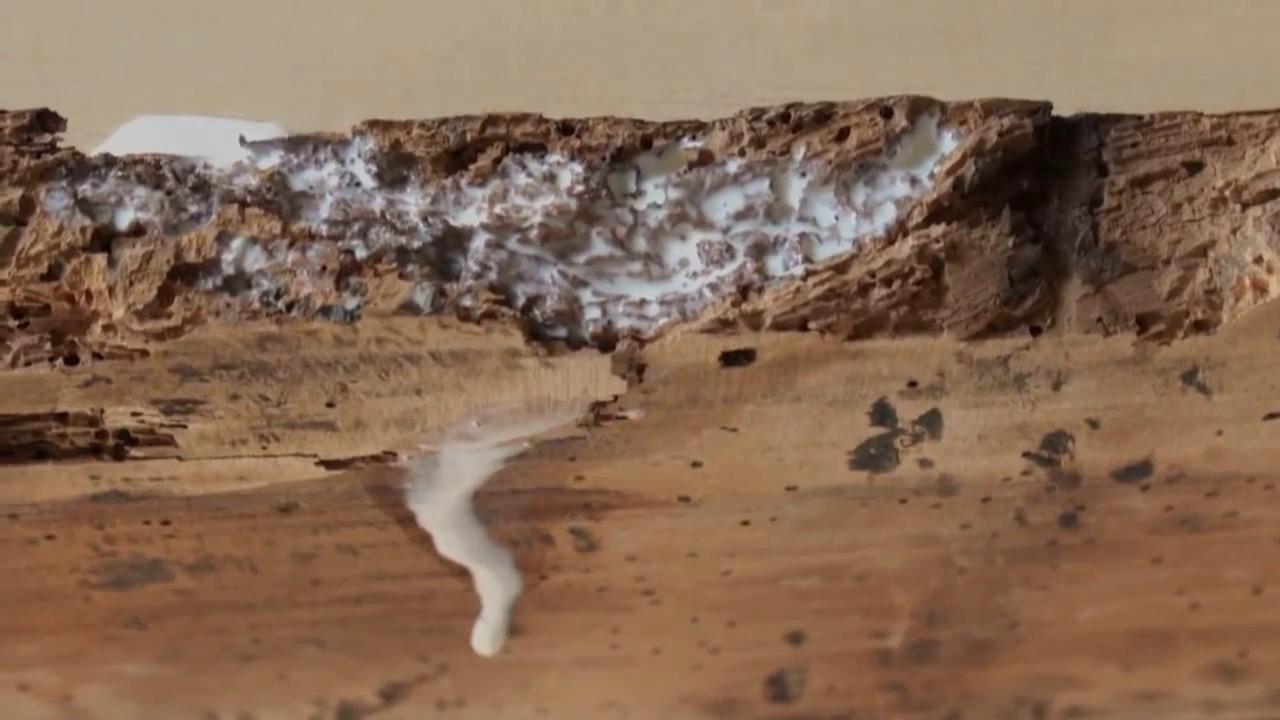 restauration de meubles durcir du bois vermoulu avec de la waterpox youtube. Black Bedroom Furniture Sets. Home Design Ideas