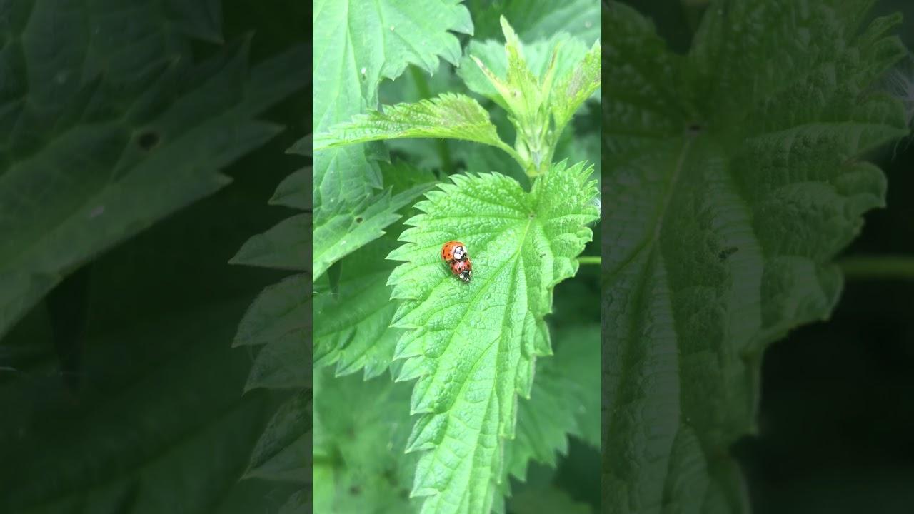 Insekten Busch Porno FSK12 - YouTube