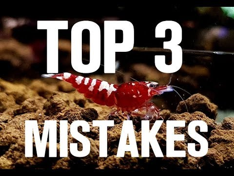TOP 3 MISTAKES In SHRIMP KEEPING