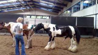 Repeat youtube video Dekking (stallion is for sale) Jessie door Celtic Sir Gwynfor    Tinkers.