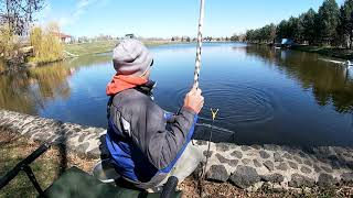 Рыбалка Поклевки карпа на поплавочную удочку