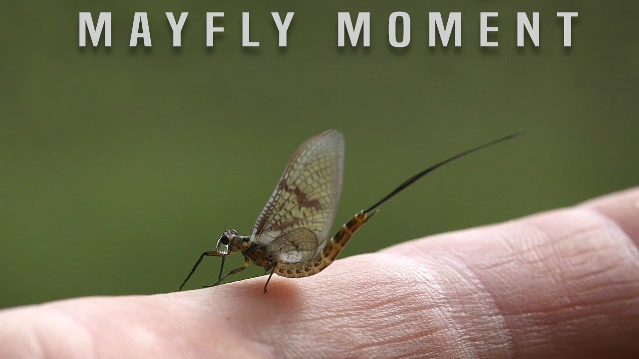 A Mayfly Moment