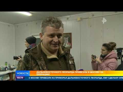 РЕН-ТВ Дневные новости. От 17.02.2020
