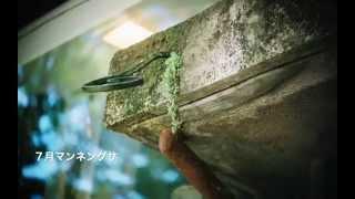 同潤会 青山アパートメント 植物の記憶
