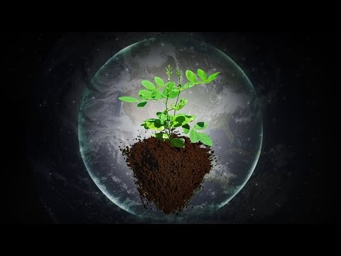Music for Plants - Music Stimulation for PLANT HEALTH - Brainwave Entrainment
